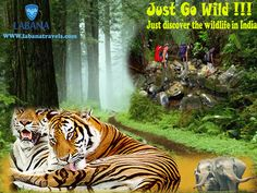 Unravel the secrets of nature scattered in different parts of the country, India with wildlife tours and have a life time experience in this rich provincial country