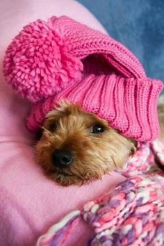 Tickled Pink Pooch!   That is so sweet and comfortable.  What a cutie!