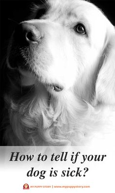 How to Tell If Your Dog Is Sick – My Puppy Story - A dog cannot talk and, thus, is unable to tell you when it is facing some issues.