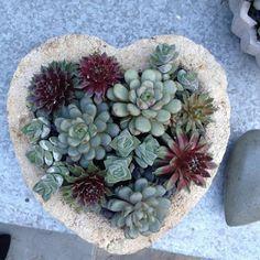 From Simon Simon Wood Garden Design Agaves, Garden In The Woods, Home And Garden, Cactus, Garden Oasis, Plantar, Gardening Tips, Outdoor Spaces, Garden Design