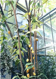 Cocoa tree - ORIGINAL WATERCOLOR PAINTING cacao palm house landscape