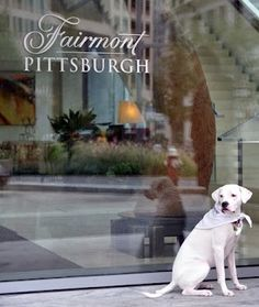 A hotel stay is always brightened by a furry, feathered or finned friend. With that thought in mind, we took a look at the world's most adorable hotel animals: http://ow.ly/e1qVy  PHOTO: Edie (named after Andy Warhol muse Edie Sedgwick) is the Fairmont Pittsburgh's friendly canine ambassador