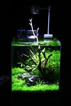 great looking planted nano tank - might need to pick up one of these for my desk
