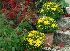 www.rustica.fr - Fleurir les abords de la maison en automne
