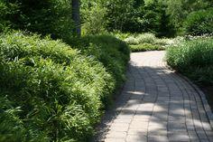 Perennials for Heat-Baked Gardens – Comptonia peregrina hedge Nitrogen Fixing Plants, Sweet Fern, One Summer, Woodland Garden, Fruit Garden, Hedges, Ferns, Perennials, Landscape