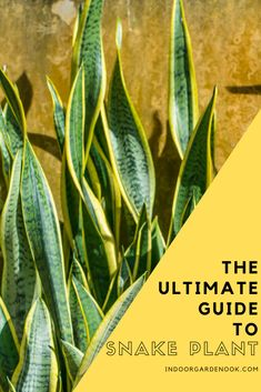 Indoor Container Gardening The snake plant is one of the best plants for beginners because it will n Container Plants, Container Gardening, Gardening Tips, Indoor Gardening, Snake Plant Care, Garden Nook, Plant Guide, Indoor Flowers, Herb Pots