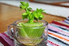 8 Vegetables You Only Need To Buy Once, Then Regrow Forever - Unbelievable Facts