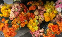 Ranunculus at whole foods in buckhead on 5/21/2016