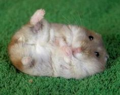 Fat animals are cute
