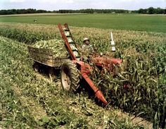 Color photograph of a man picking corn with a No. sweet corn picker mounted on a Farmall Super M tractor. Case Ih Tractors, Farmall Tractors, Old Tractors, John Deere Tractors, Antique Tractors, Vintage Tractors, Vintage Farm, Vintage Signs, International Tractors
