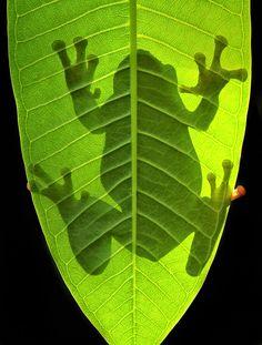 of light and shadow - Irawan Subingar