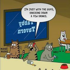 I'm just with the guys, knocking down a few drinks (Funny Animal Pictures) - #bar #cat #drinks #tavern