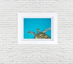 Printable Sea Turtle photography by SnappyBrickPhotos via Etsy. Only $5.50 and you can print 5x7, 8x10, or 11x14. Beautiful wild turtle in the Caribbean ocean. Turquoise, teal, swimming, beach decor, decoration, wall art, DIY, printable, stock photo, photography. Love it!!