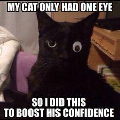cat one eye