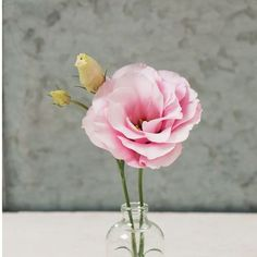 Mariachi Pink Pelleted Lisianthus Seeds (Eustoma grandiflorum) + FREE Bonus 6 Variety Seed Pack - a $30 Value!