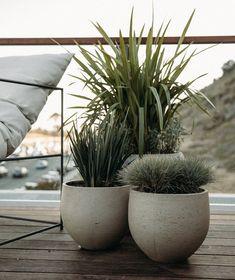 Potted Plants Patio, Balcony Plants, Balcony Garden, Outdoor Planters, Concrete Planters, Outdoor Gardens, Diy Garden, Shade Garden, Garden Pots