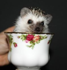 ...tea time even for hedgies...
