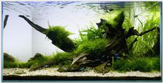 """Aquascape of the Month November """"Riverbank"""" Aquascaping, Aquarium Aquascape, Planted Aquarium, Saltwater Aquarium Fish, Nature Aquarium, Saltwater Tank, Aquarium Design, Aquarium Setup, Aquarium Ideas"""