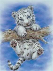 An Adorable white tiger cub!  Hang in there Friday is coming. . . .! Just soooo cute. . . .