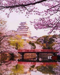 Hakone, Naha, Hiroshima, Yokohama, Kyoto, Wallpaper Nature Flowers, Flowers Nature, Beautiful Flowers, Trapper Keeper