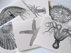 Jellyfish, Octopus, Lobster, Starfish, Puffer Fish, Shell Sealife Note Card Stationery Set of 6 Cards. $7.00, via Etsy.