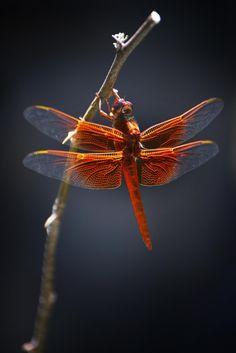 Dragon Fire par Dana McMullen's Imageroom on 500px