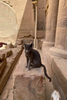 Cats In Ancient Egypt, Animals And Pets, Cute Animals, Beautiful Cats, Kittens Cutest, Kangaroo, Egyptian, Russia, Friends