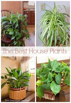 The best house plants