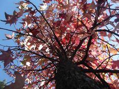 Desafios de Outono