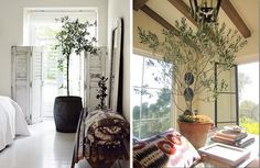 When I'm stuck indoors throughout the winter, there's nothing cozier than being surrounded by plants and trees. Indoor Olive Tree, Indoor Trees, Indoor Flowers, Indoor Plants, Painted Wood Floors, Living Room Kitchen, Growing Plants, Garden Styles, Houseplants