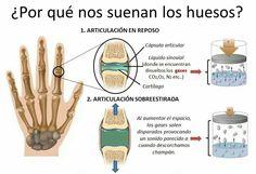 ...PORQUÉ NOS SUENAN LOS HUESOS....!!@Torreperogil #Fisiobian #fisioterapia #Osteopatia #Salud #Dietetica #Nutrición