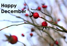 What are your favorite #December #Traditions?