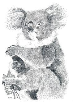 Een koala in Oost-Indische inkt getekend. Er was hier veel ook voor detail en het resultaat is bewondernswaardig