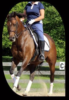 7 Essential Aids For An Epic Canter Transition - Horse Listening