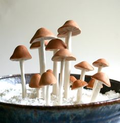 edible candy mushroom cake decor yes I can put these on our weddin cake