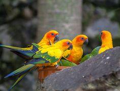 Loro Parque Parrot, Animals, Parks, Parrot Bird, Animales, Animaux, Animal, Animais, Parrots