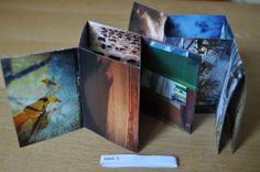 Photozine Shophia Sherwood