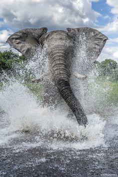 Africa | African Elephant. Chobe National Park, Botswana | ©Ben Cranke