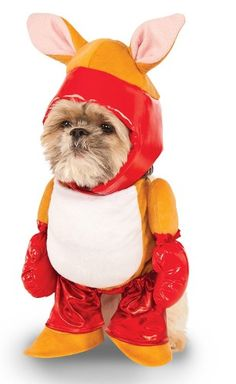 Shop for Walking Boxer Kangaroo Dog Costume - Large. Get free delivery On EVERYTHING* Overstock - Your Online Dog Supplies Store! Dog Halloween Costumes, Pet Costumes, Halloween Items, Animal Costumes, Halloween Season, Kangaroo Costume, Puppy Costume, Designer Dog Clothes, Costume
