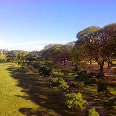 Volviendo a casa #nature #trees #green #vert #sunnyday #spring #printemps #Belgrano #BuenosAires #Argentina (en Figueroa Alcorta Y Monroe)