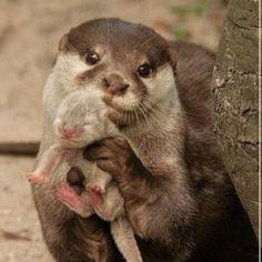 Baby otter! @belmontmedina