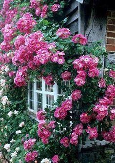 Un mundo de flores y plantas.