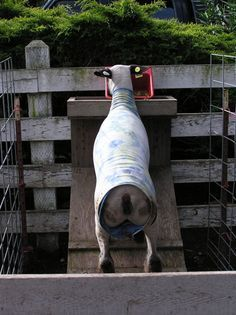 feeder for the show lambs