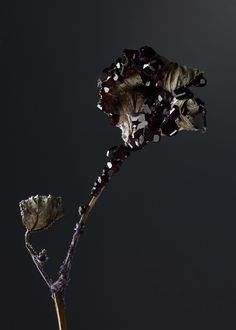 Encrusting Flora With Stabilised Crystals