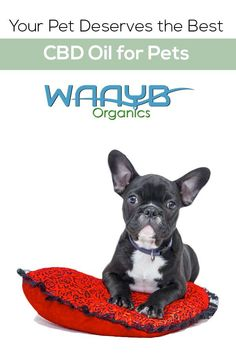 Buy WAAYB Organics Organic CBD Oil for Pets online. The best CBD oil for pets in and strengths. Funny Dog Names, Best Dog Names, Puppy Names, Pet Names, Funny Dogs, Cool Dog Names, Dog Names Unique, Chihuahua, Medication For Dogs