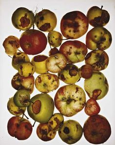 I love this photograph because it shows the growth and decay of of fruit. I think it's interesting because it's not just one Apple it's a bunch of apples that are all mouldy and all look unique