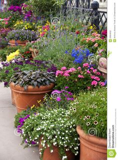 Potted Garden Plants How to group container gardens together scene natural and gardens flower pot gardening alices garden workwithnaturefo