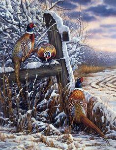 Rosemary Millette Forgotten Fenceline- Pheasants #pheasanthunting