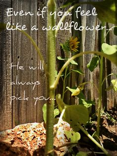 Wallflower @Jennifer Ferguson