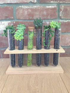 Succulent test tube centerpieces